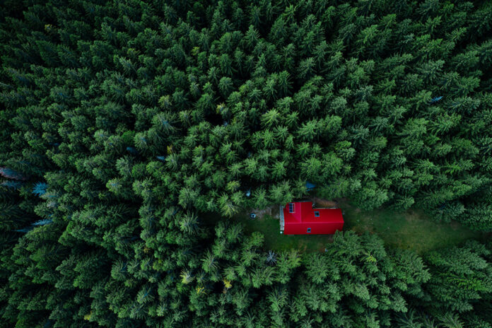 Ensam stuga i stor skog